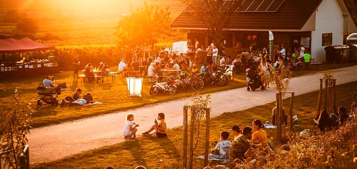 Piknik vo vinohradoch